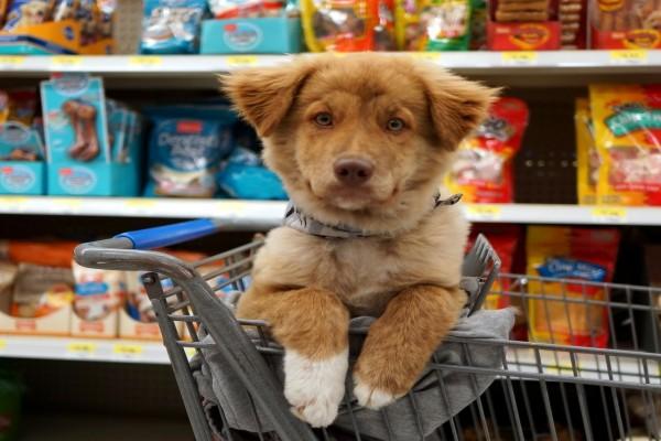 Un magnífico perro en un carrito