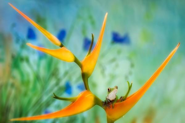 Pequeña rana sobre una flor