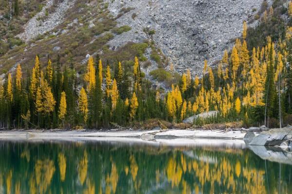 Árboles en otoño junto a la ladera de la montaña