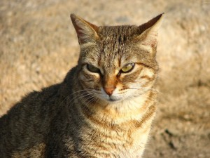 Postal: Un bonito gato
