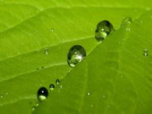 Gotas de agua sobre una hoja verde