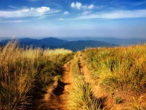 Camino en campo abierto