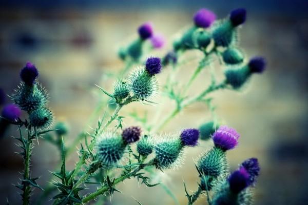 Plantas con espinas