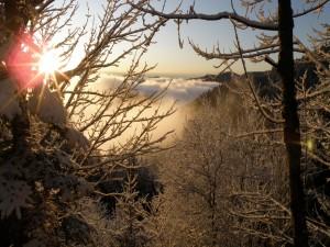 Postal: El sol entre los árboles nevados