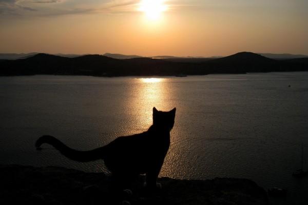 Un gato contemplando el paisaje al atardecer