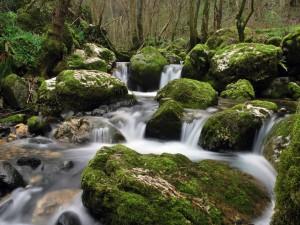 Grandes piedras con musgo en el cauce de un río