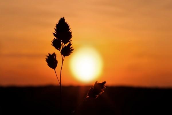 Espiga y el sol del atardecer