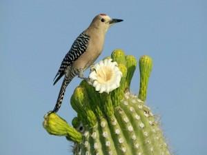 Un bello pájaro posado sobre un cactus