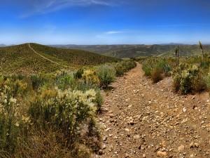 Camino de tierra y piedras en el campo