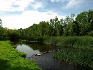 Plantas y piedras en el cauce del río