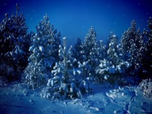 Brillos en un paisaje nevado