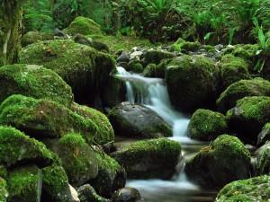 El cauce de un río con grandes piedras verdes