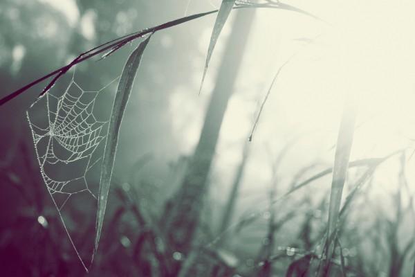 Tela de araña desde una hojas hasta el tallo