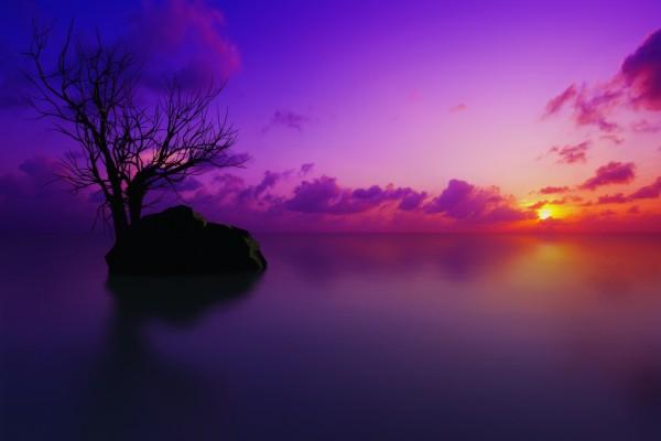 Árbol y roca en un calmado lago vistos al amanecer