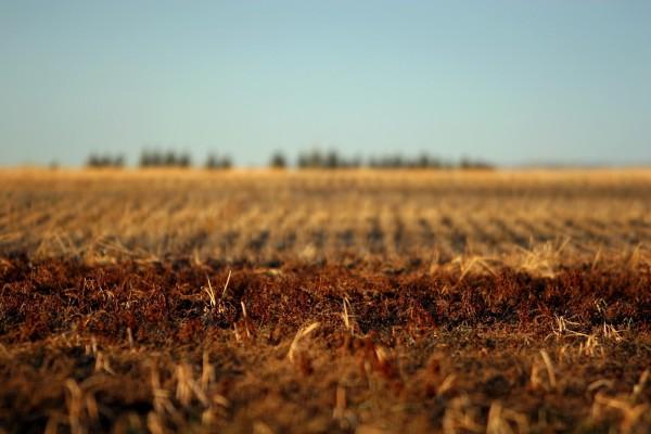 Un campo seco