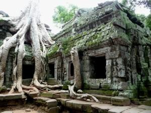 Postal: Raíces en el templo Ankor Wat