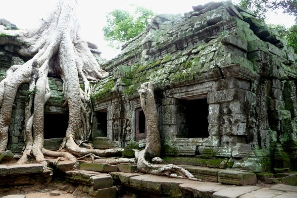 Raíces en el templo Ankor Wat