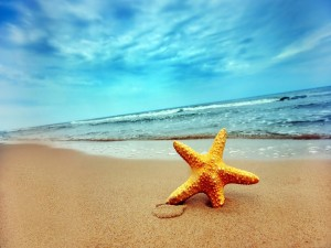 Postal: Estrella de mar en la arena de la playa