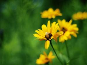 Postal: Flores amarillas silvestres