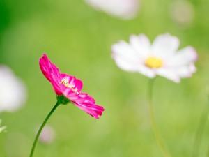 Postal: Bonitas flores silvestres