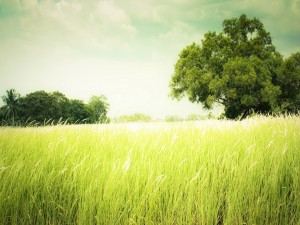 Postal: Árboles sobre frondosa hierba
