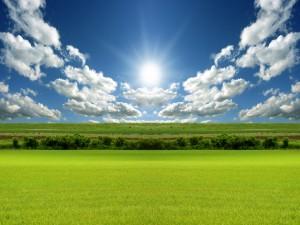 Postal: El sol iluminando un campo verde