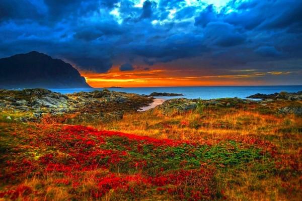 Flores y plantas junto a la costa
