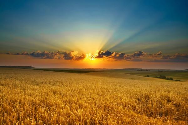 El sol brillando sobre un campo