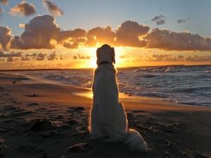 Postal: Perro sentado en una playa al atardecer