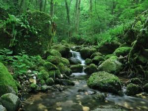 Río en un bosque verde