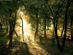 La luz del sol entre los árboles