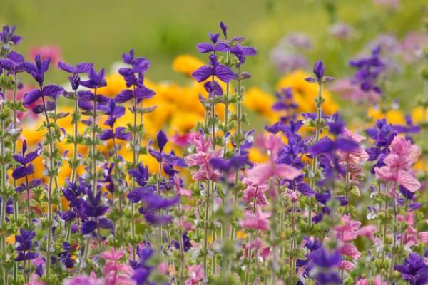Coloridas flores silvestres