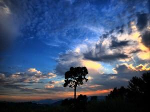 Postal: Bonito amanecer sobre los árboles