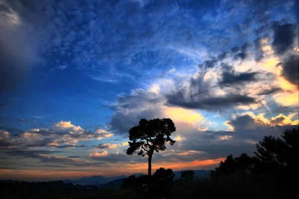 Bonito amanecer sobre los árboles
