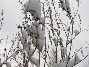 Nieve sobre las ramas de un árbol