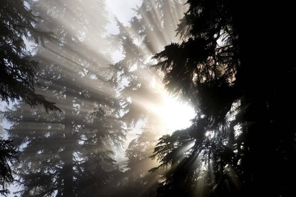 Sol brillando a través de los árboles