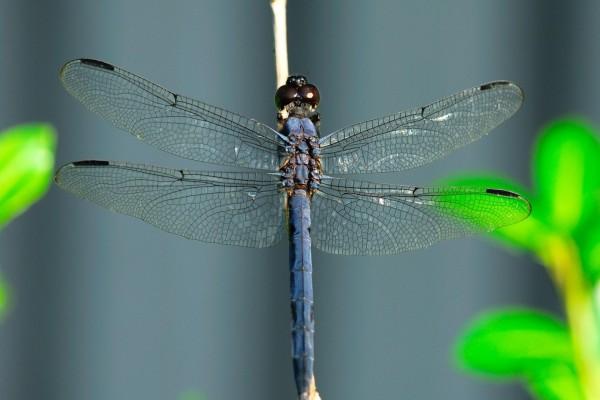 Una hermosa libélula