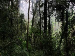 Postal: Bosque frondoso