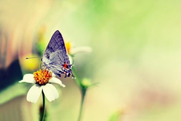 Mariposa sobre una flor con pétalos blancos