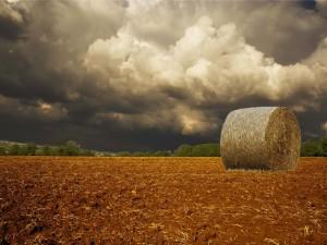 Un fardo de paja en el campo