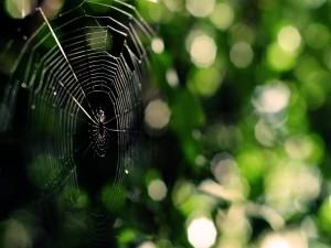 Postal: Una gran tela de araña