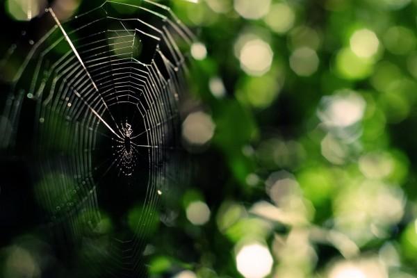 Una gran tela de araña