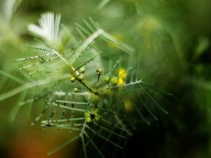 Ramas de una planta verde