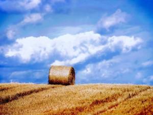 Fardo de paja en el campo seco