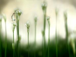 Postal: Pequeña mariposa sobre una flor blanca