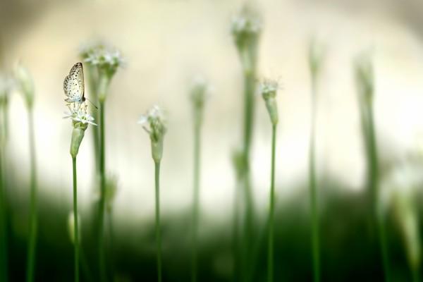 Pequeña mariposa sobre una flor blanca