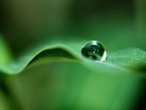 Gota redonda sobre una hoja verde