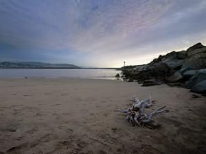 Ramas y troncos apilados sobre la arena de una playa