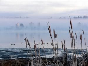 Postal: Cañas y bruma en el río
