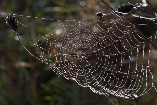 Tela de araña cubierta de agua